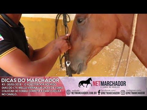 #3 DICAS DO MARCHADOR - RODRIGO DIAS - COMO COLOCAR A EMBOCADURA DE FORMA CORRETA