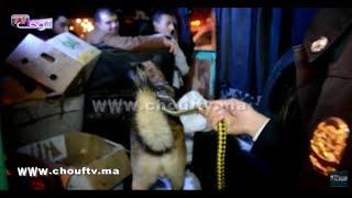 بالفيديو..كلاب بوليسية مدربة كايقلبو الطوموبيلات ليلة رأس السنة فتطوان |