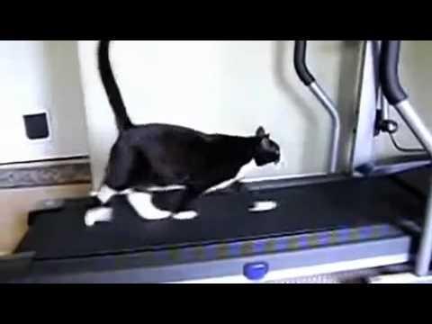 Những tình huống hài hước của mèo