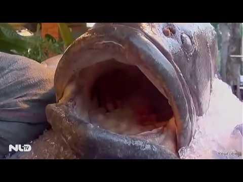"""Cá mú """"khủng"""" nặng 160 kg về Hàng Dương Quán"""
