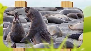 10 من أغرب المخلوقات التي تم العثور عليها في أنتارتيكا..!!