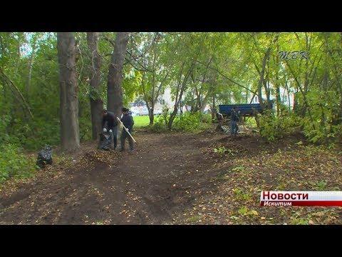 В Подгорном начали приводить в порядок лесопарк около 7 дома