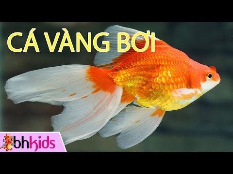 Liên Khúc Thiếu Nhi - Cá Vàng Bơi [Official MV]
