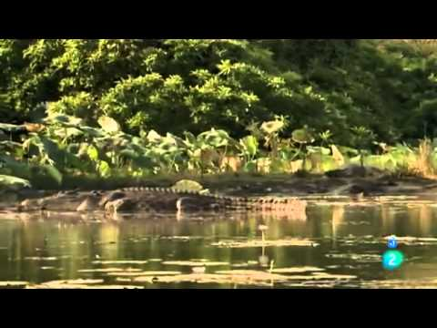 Grandes documentales   El rey cocodrilo