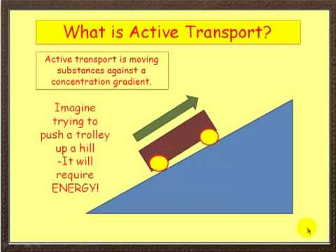 Osmosis and Active Transport