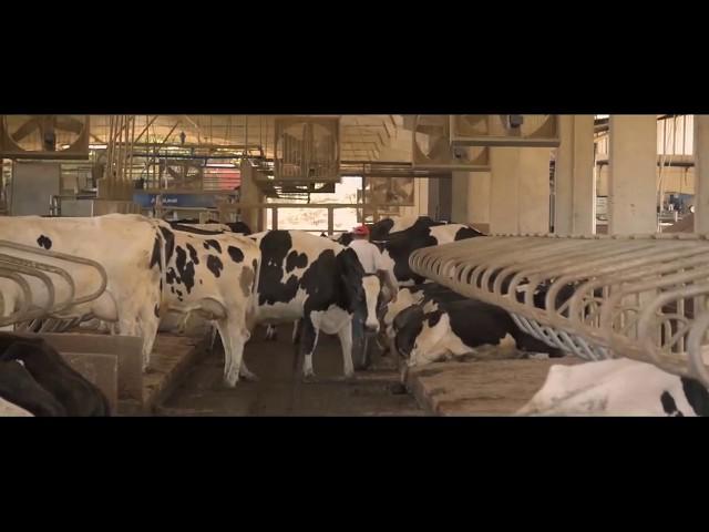 Projeto associativo de produção leiteira com ordenha robotizada | Dália Alimentos, Brasil