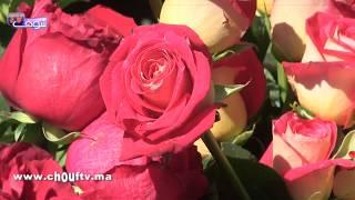 بالفيديو.. الورد غالي نهار عيد الحب  و ثمن الوردة الحمراء وصل لـ50 درهم   |   روبورتاج