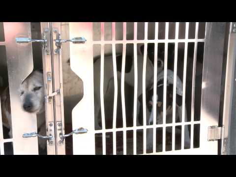 0 Missaukee County Puppy Mill Rescue 2013