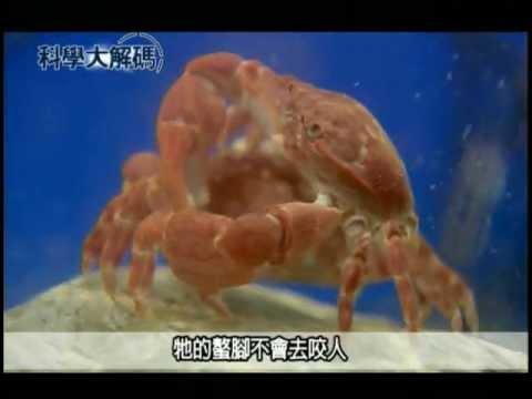 37. 奇妙的龜山島海底生態 - YouTube