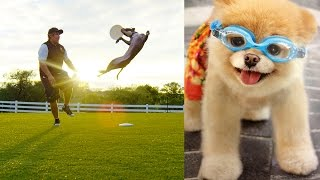 World's Most Amazing Dogs in Super Slow Motion!