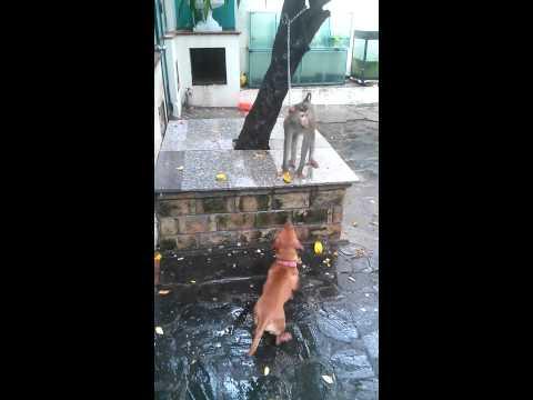 Chó và khỉ đánh nhau