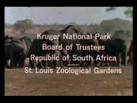 wild kingdom youtube