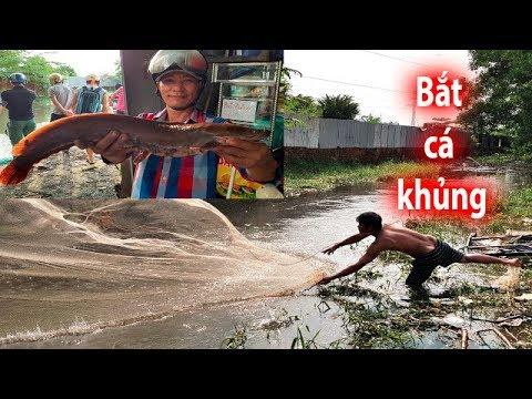Khó tin bắt cá KHỦNG ở Sài Gòn lại dễ như xứ Miền Tây sông nước