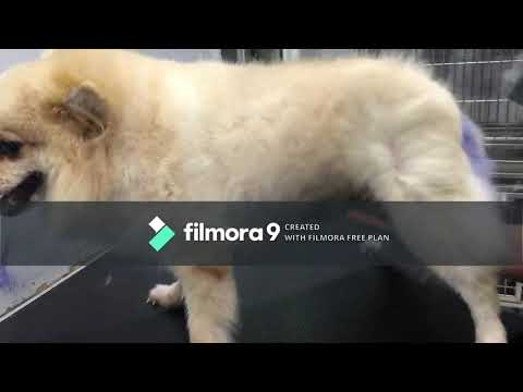 Dogs grooming |funny dogs |cute dog