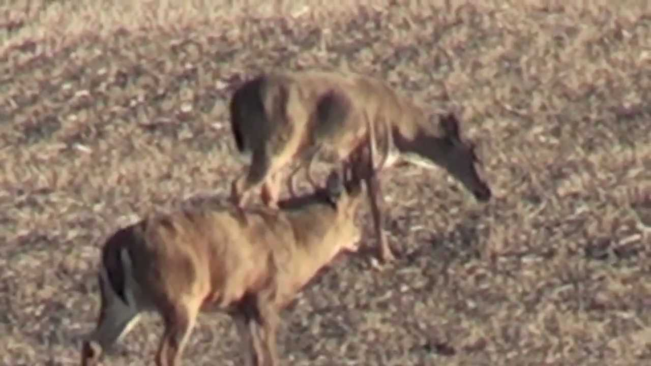 monster white tail bucks Images - Frompo - 1