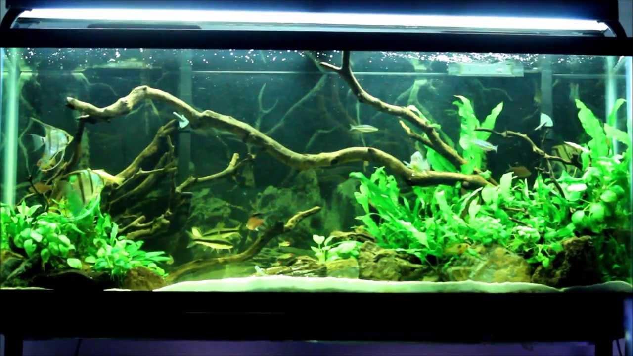 55 gallon fish tank ideas member spotlight butterfly for 55 gallon aquarium decoration ideas
