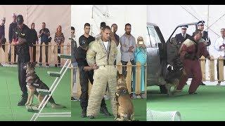 بالفيديو: شوفو كيفاش الكلاب البوليسية كاتشد المجرمين |