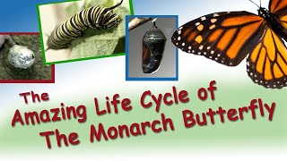Bir kelebeğin yaşam döngüsü