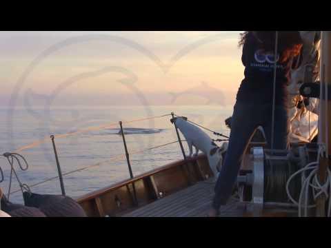 Ecco Brunone, il capodoglio del Golfo di Napoli avvistato di nuovo Avvistato per la prima volta nel 2004 continua a frequentare l�