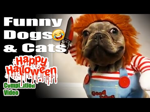 Happy Halloween 🎃👻🎃 Funny Pet, Funny dog 🐶Funny Cat 😽 Funny Compilation Videos 🤣🤣🤣
