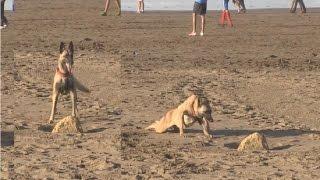 أنا و صاحبي الحيوان:شوفو كيفاش تروضو الكلاب بأقل مجهود | أنا و صاحبي الحيوان