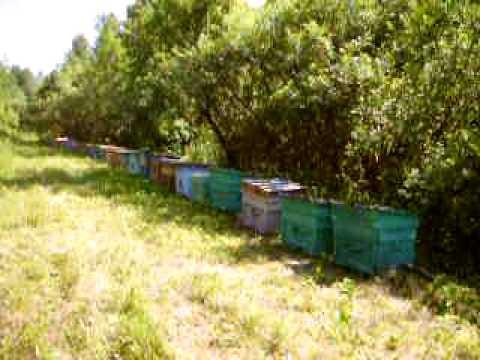 Карника на липе 2010.养蜂业