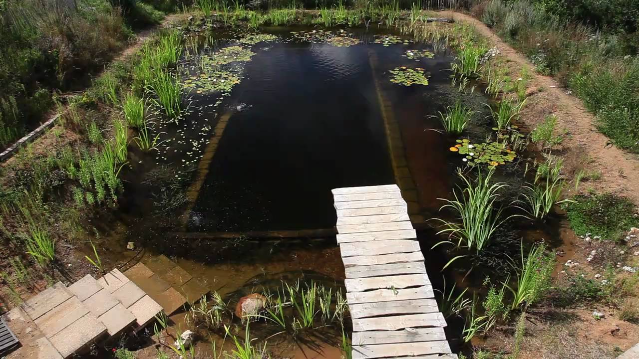 Natural pools natural pool selfbuild youtube for Sustainable pool