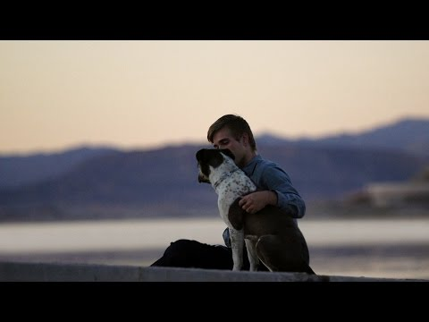 Você salva um cachorro. Um cachorro salva você.