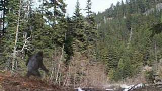 Every Bigfoot Picture