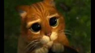 SHREK CUTE CAT
