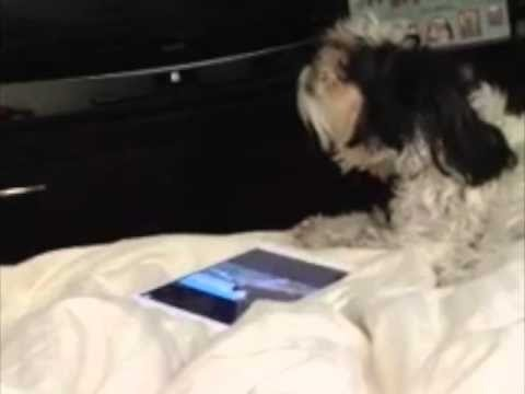 So cute - Dog singing to our music!