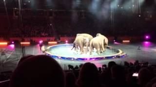ringling brothers and barnum bailey 2016 (elephants)