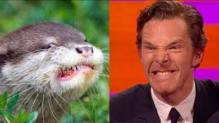 Benedict Cumberbatch's resemblance to an otter – The Graham Norton Show: Series 18 Episode 9 – BBC