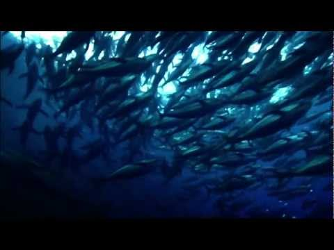 Saving the Oceans Can Feed the World