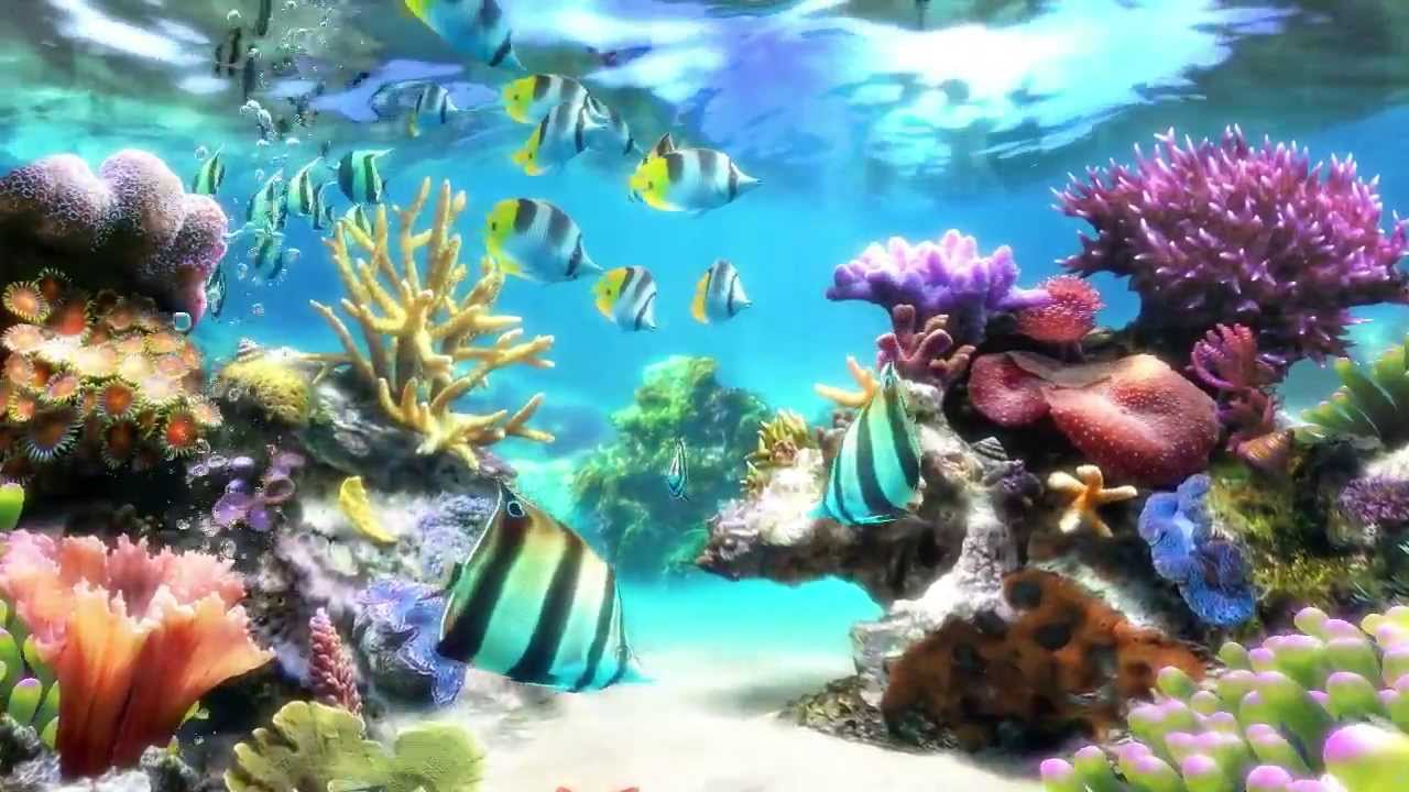 Sim aquarium screensaver live wallpaper youtube for Aquarium video