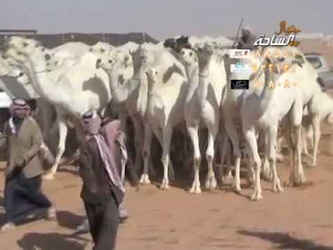 مسيرة منقية الشيخ / علوش بن ضيدان بن هويدي العجمي ..