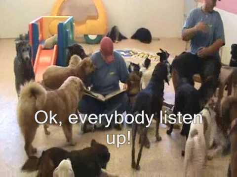 Story Time: Dogs Read Books at Villa La PAWS, Phoenix AZ