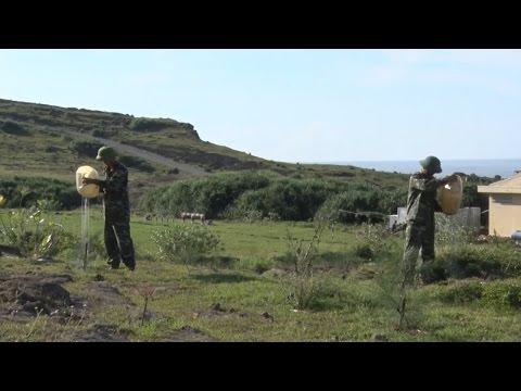 Tin Tức 24h Mới Nhất | Quảng Ngãi: Trồng rừng phủ xanh đảo Lý Sơn