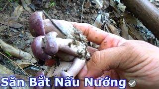 Hái nấm tím về xào thịt ếch đồng - nấm trắng có thể ngộ độc