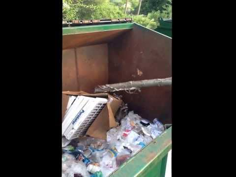 Police rescue raccoon family from dumpster