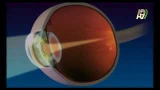 Göz ve evrim - gözün yapısı