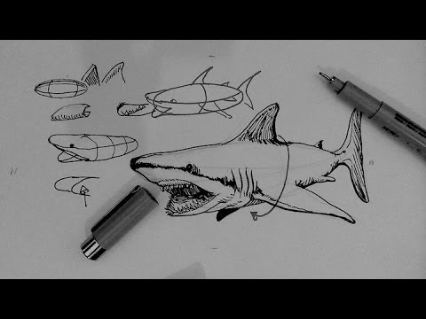 Pen and Ink Drawing Tutorials | How to draw a shark