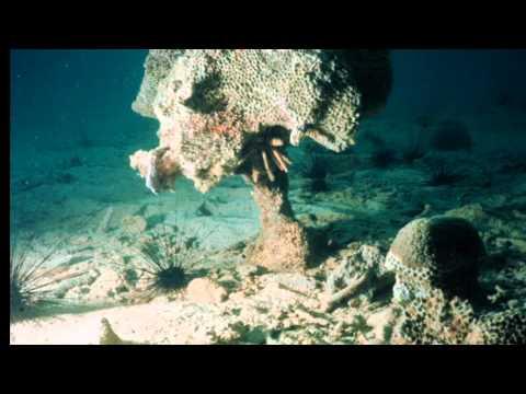 Coral Reef Decline