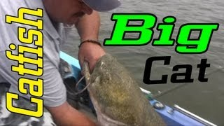 Big Flathead Catfish Caught On The Ohio River