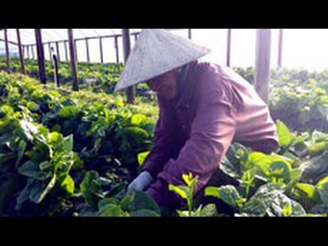 Chất dân dã Việt trên đất Mỹ