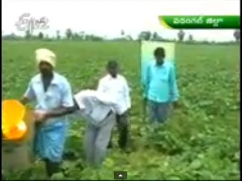 Warangal farmers against to cluster policy in green gram cultivation on 17th February 2014