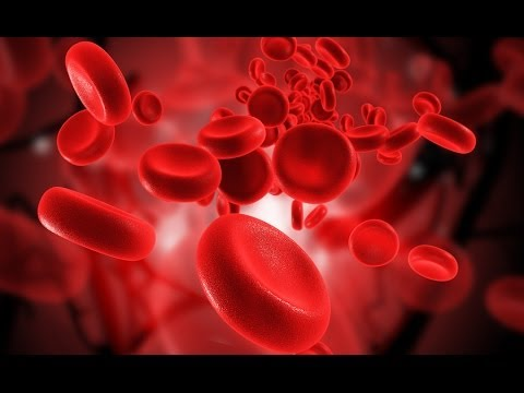 L120Y | BLOOD PRODUCTION | BONE MARROW | LIVING A LONG LIFE