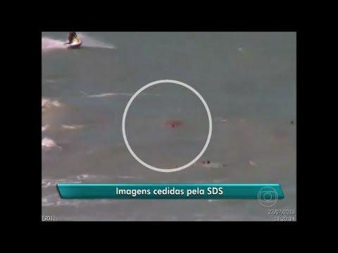Ataque de Tubarão em  Recife Pernambuco video 5  ataque de tubarão em recife tavares