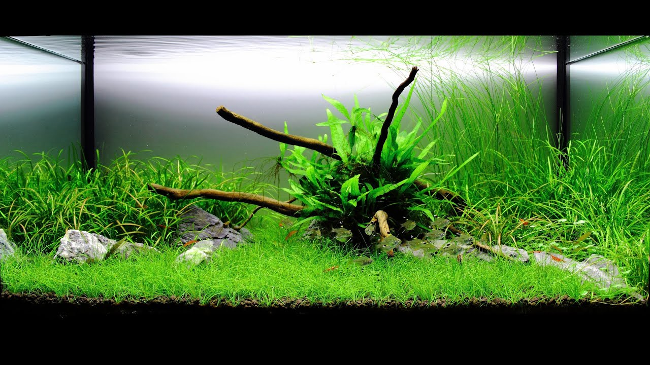 How to Grow Freshwater Aquarium Plants: 15 Steps (with ...