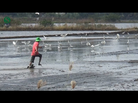 Bắt cá trên ruộng lúa vừa bơm nước xong | FISHING